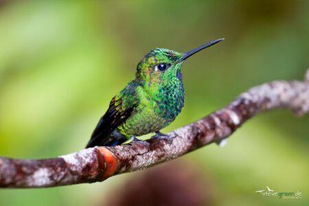 Costa Rica - Monteverde Reservat